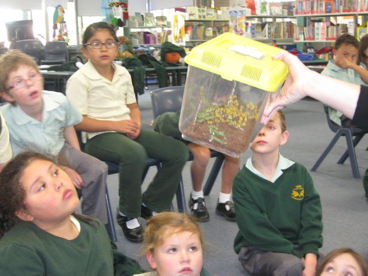 Menai Primary School students inquisitive minds.