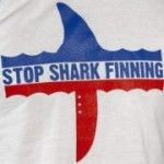Stop Shark Finning Petitions: http://www.stopsharkfinning.net/stop-shark-finning-petitions/ #SeaShepherd #defendconserveprotect