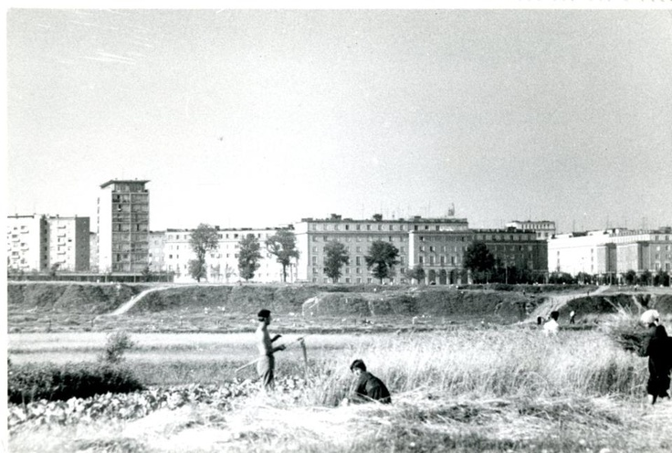 łąki z widokiem na Centrum D.
