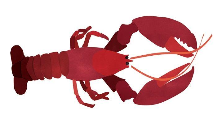 An illustration of lobster