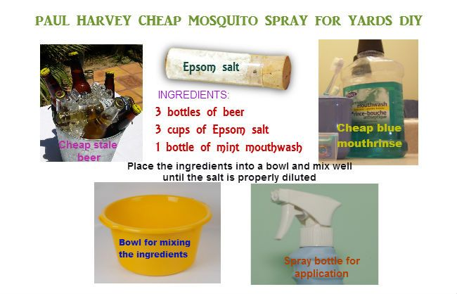 Homemade Paul Harvey Mosquito Spray for yard