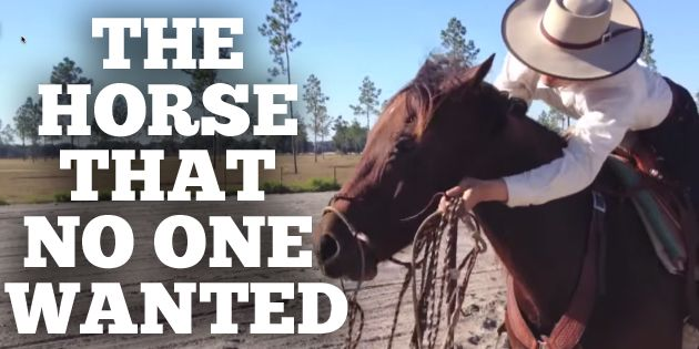 This unwanted horse just shocked the world. You won't believe what he can do now.