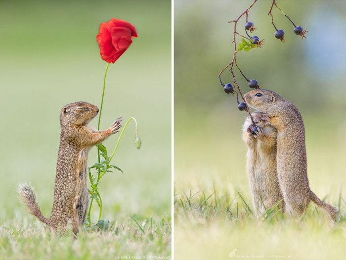 10 Emotional Pictures From The Life Of Charming Gophers #lovepictures #charmingphotos #bestpicsever #bestphotos2016
