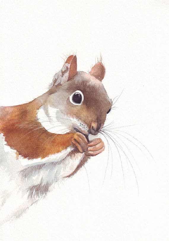 Squirrel painting art print of animal watercolor by Splodgepodge, $15.00