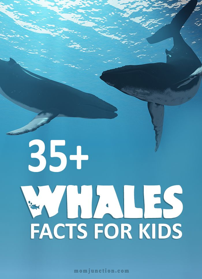 35+ Whale Facts For Kids