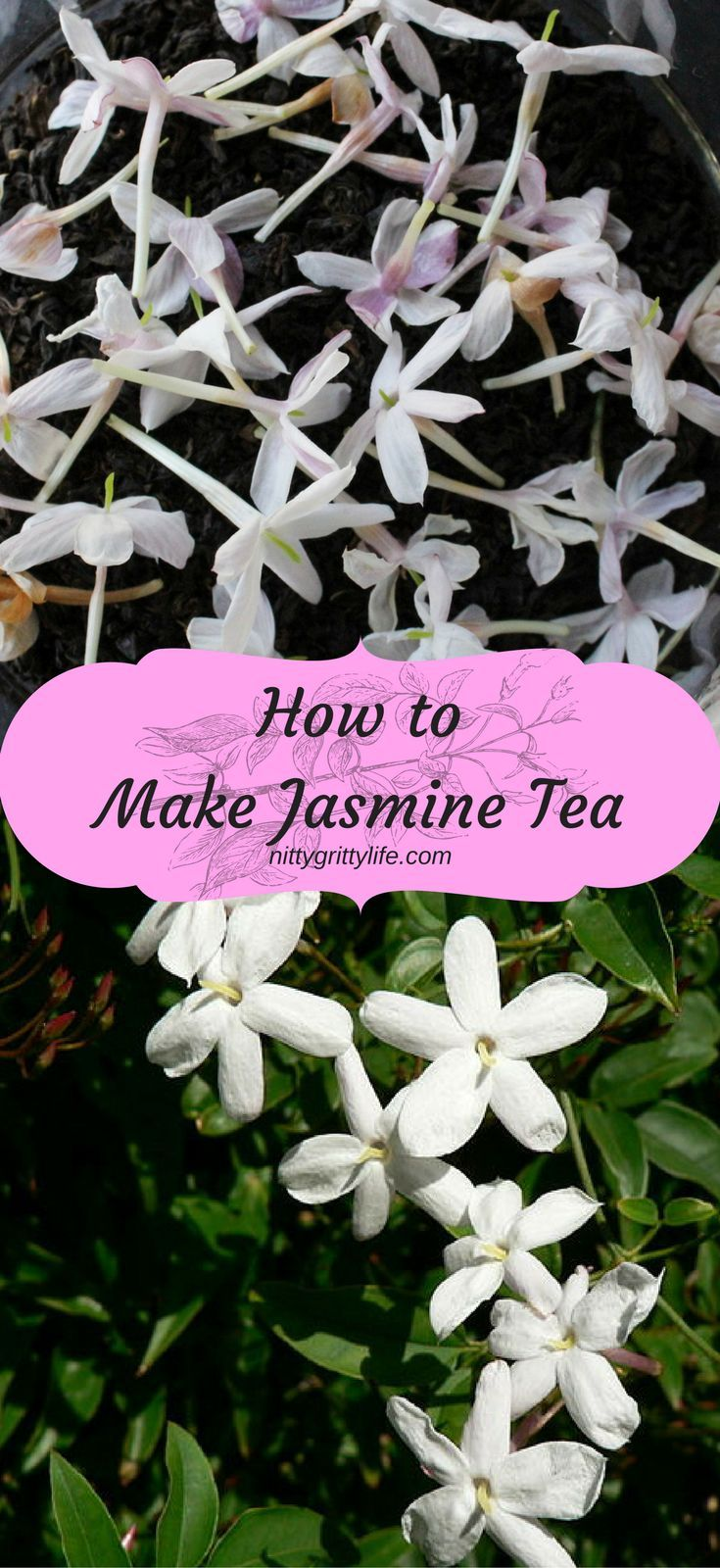 """Jasmine tea is an exotically scented, sensually delicious, but simple tea to make at home. Save money & """"tea"""" like royalty with this DIY preparation."""