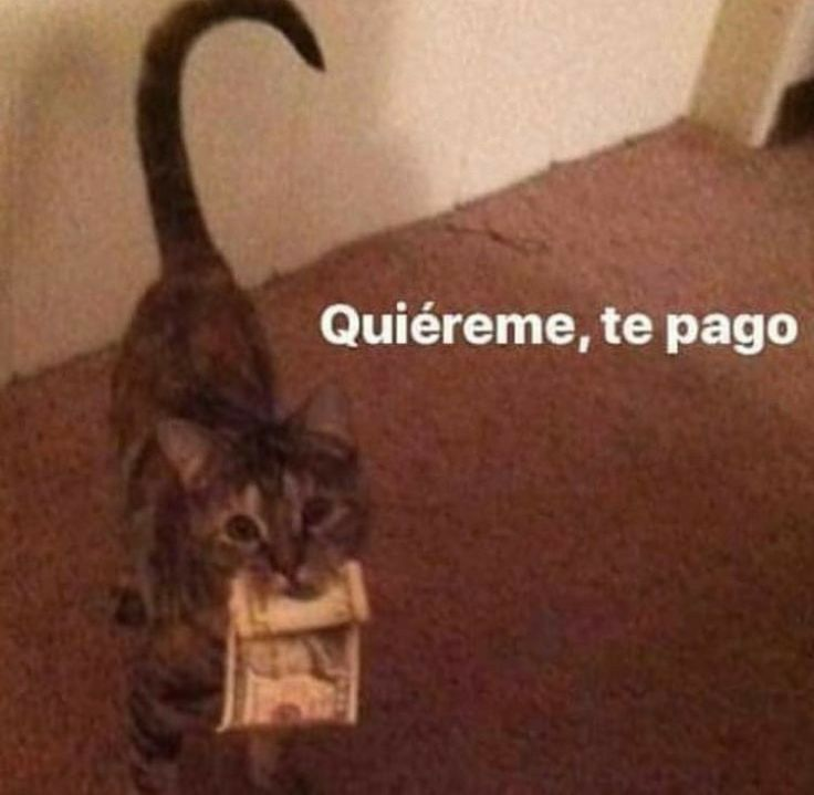 Pin De Karen Celeste Sosa Mendez En Bts Memes Romanticos Memes Meme Gato
