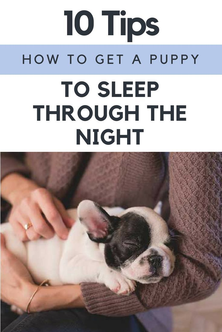 How To Get A Puppy To Sleep Through The Night 10 Tips Getting