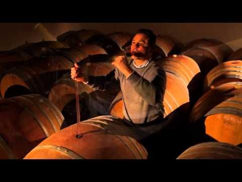 ▶ The world of wines in Friuli Venezia Giulia - Italy.mp4 - YouTube