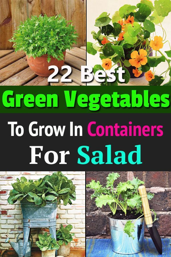 22 Best Green Leafy Vegetables For A Container Salad Garden Home