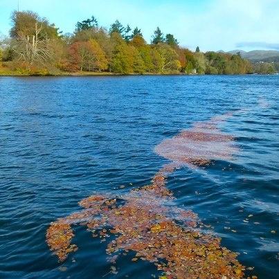 Autumn leaves - Windermere