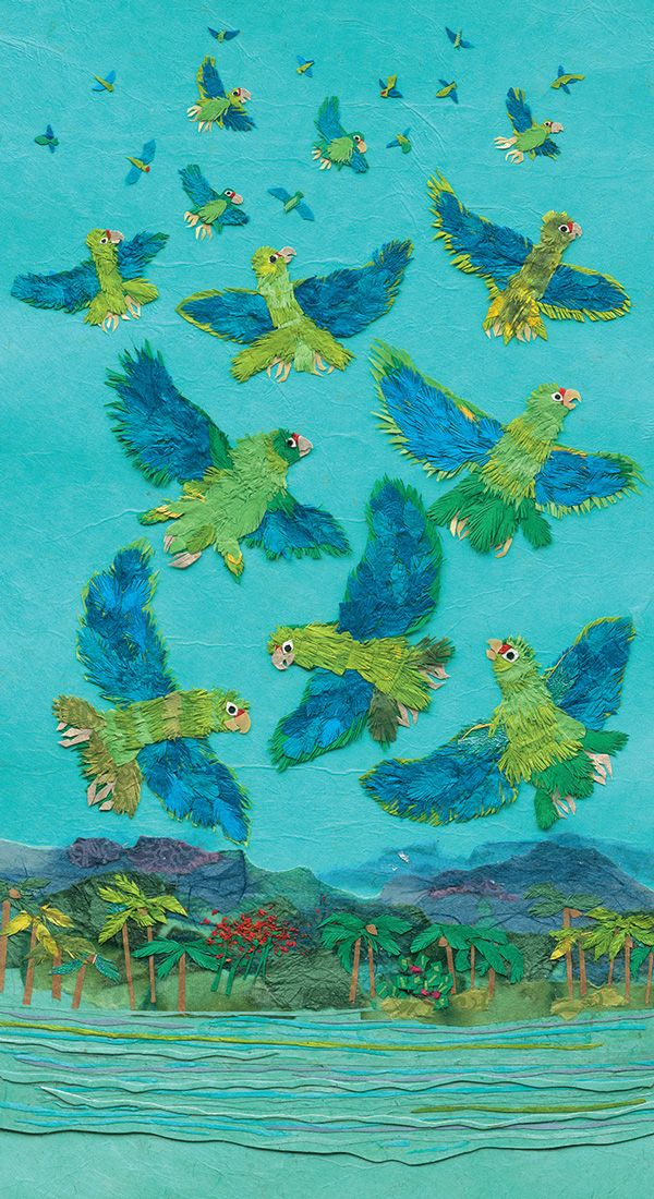 Parrots Over Puerto Rico: An Illustrated Children's Book Celebrating the Spirit of Conservation   Brain Pickings