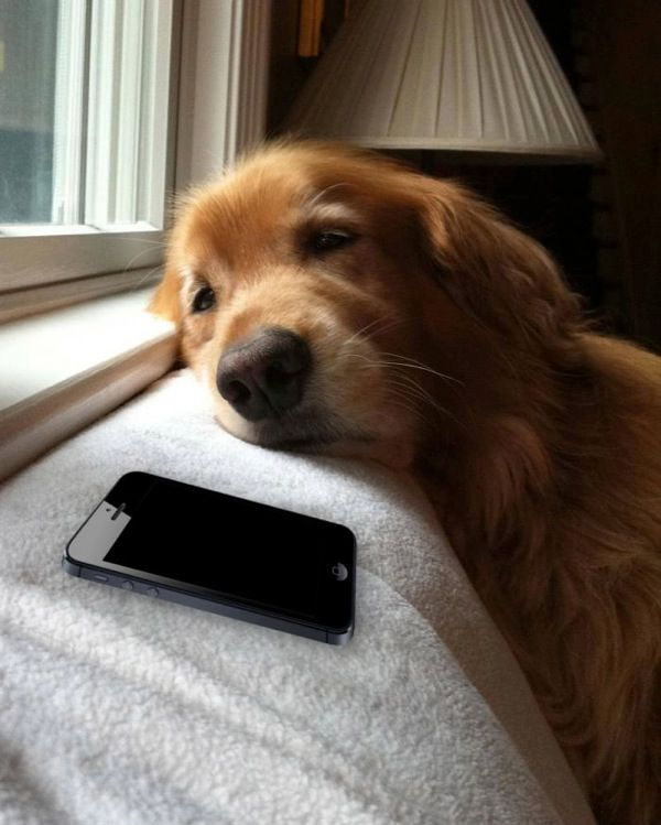 Waiting for a txt message,for sure me and my dog littrally ill set my cell down and if I don't hear it go off she picks it up and brings it to mee or she barks at me and looks at my cell lol