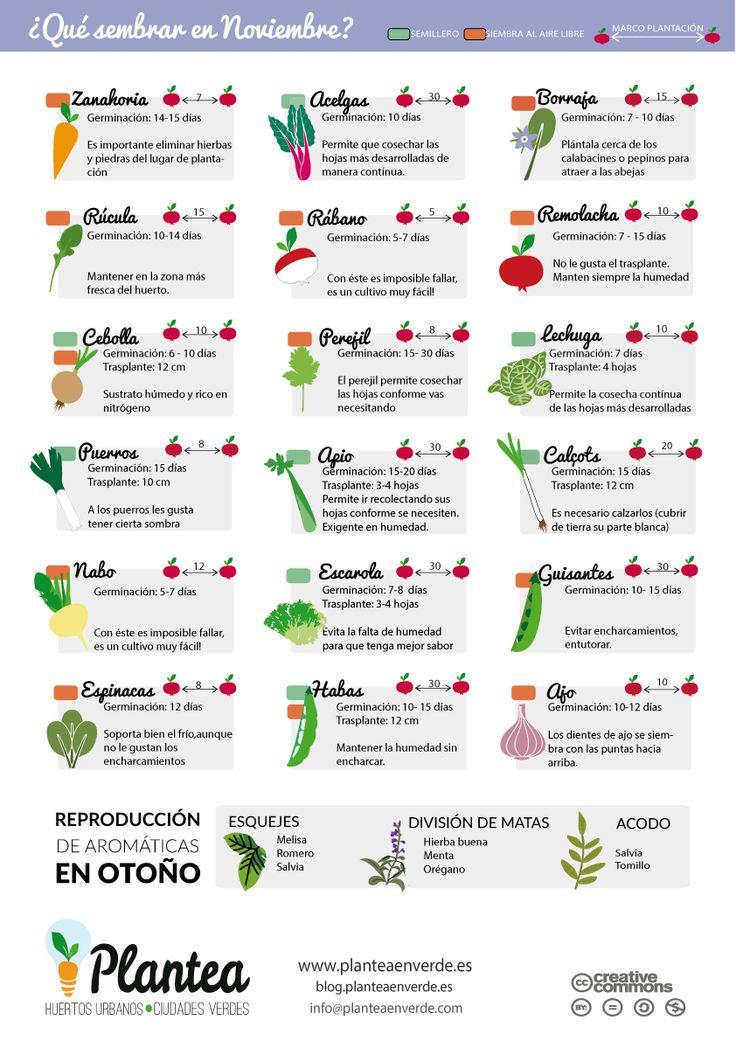 Calendario de #siembra para el #huerto urbano en noviembre
