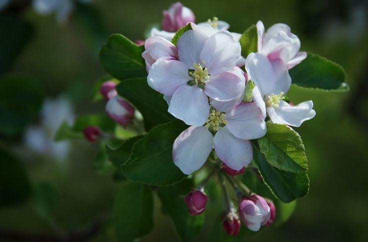 一日一輪、季節の花と花言葉を紹介する「今日の一輪」。長野県戸隠の地域おこし協力隊の栗原健さんが、地域と植物の魅力を伝えます。