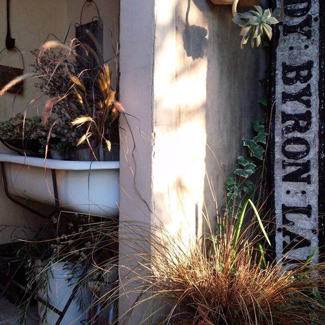 秋やね~気持ちいいやね~♪玄関先をパープルファウンテンやらグラス系でワサワサ秋色にしてみました♪ #ベビーバス#秋色#ディスプレイ#暮らし#ナチュラルガーデン