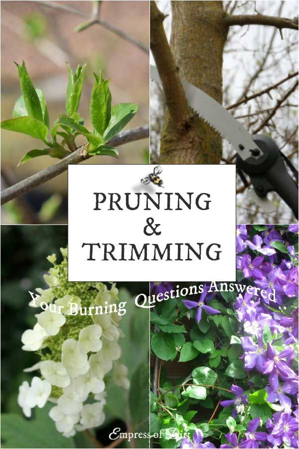 To prune or not to prune? Shakespeare didn't know either. These are answers to the most frequently-asked pruning questions. I've done my best to simplify it so you can get the right tool, trim at the right time, and ignore the rest.