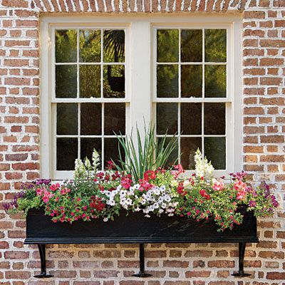"This lush planter reflects the proven ""thriller, filler, spiller"" recipe that puts a tall plant in the center, mounding plants on the sides, and trailing plants flowing over the edges.    What's planted: Japanese iris is the thriller. White snapdragon, violet African daisy, red common geranium, and white 'Tidal Wave Silver' petunia are fillers. Pink and red ivy geraniums, dark red calibrachoa, and purple Lanai verbena are spillers."