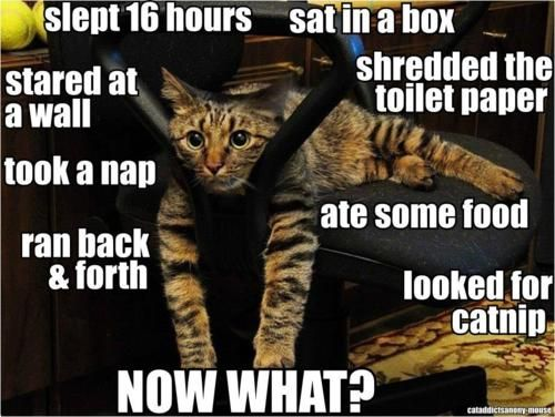 Haha! This is so my cats!! Too FUNNY!
