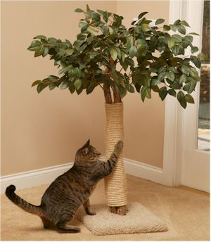 126 Best Images About Pet Beds Cat Trees And Things On