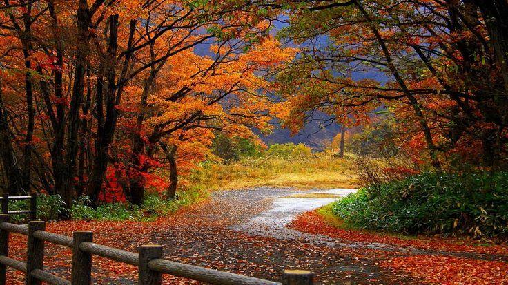 Fall Trees Hd Desktop Wallpaper Widescreen High Definition Fall Wallpaper Autumn Landscape Landscape Trees