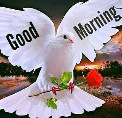 Good Morning greetings