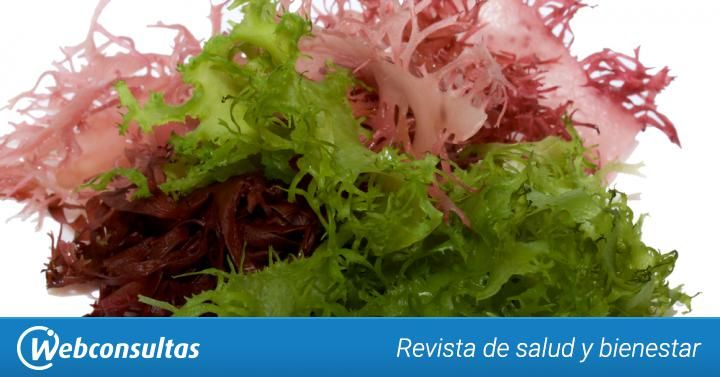 Tipos de algas comestibles más famosas