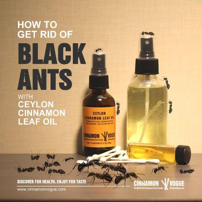 Best 25 Black Ants Ideas On Pinterest Ants In Garden Lemon Grass Plant And Paper Goods