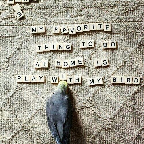 My bird♡