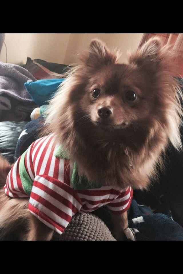 Nala the christmas elf