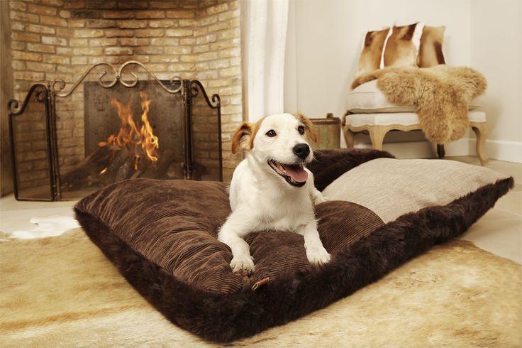 stupende le cucce design by Lotte - prodotti per cani - idee design - mobili - arredo interno