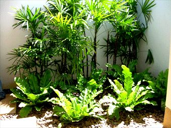 38 best My tropical looking garden inspirations images on