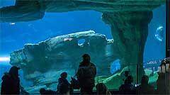 Sortie enfant Paris: Aquarium de Paris. #sorties #Paris #idées #enfants #famille #activités