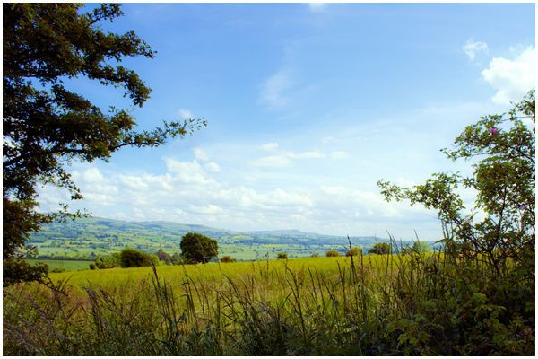 A summer view in shropshire