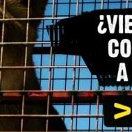 Firma y apoya la campaña 'Circo sin animales'