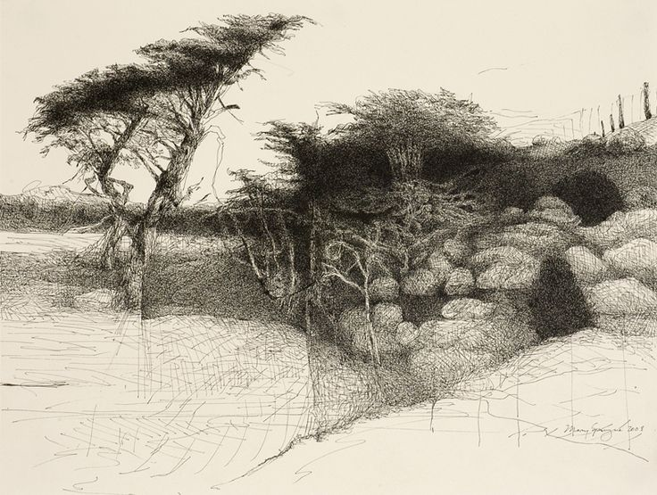 Point Reyes Trees, Northern California, 2008, by Mary Sprague.