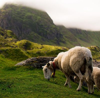 Mako Travels: Explore Norway from a sheep's point of view