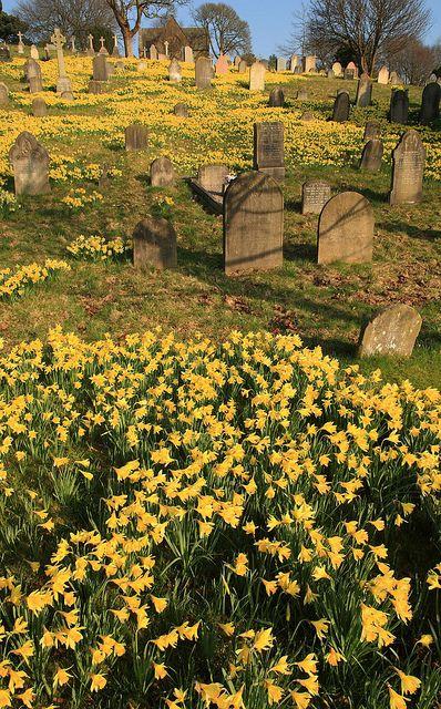 Lancaster Moor Cemetery, England in springtime