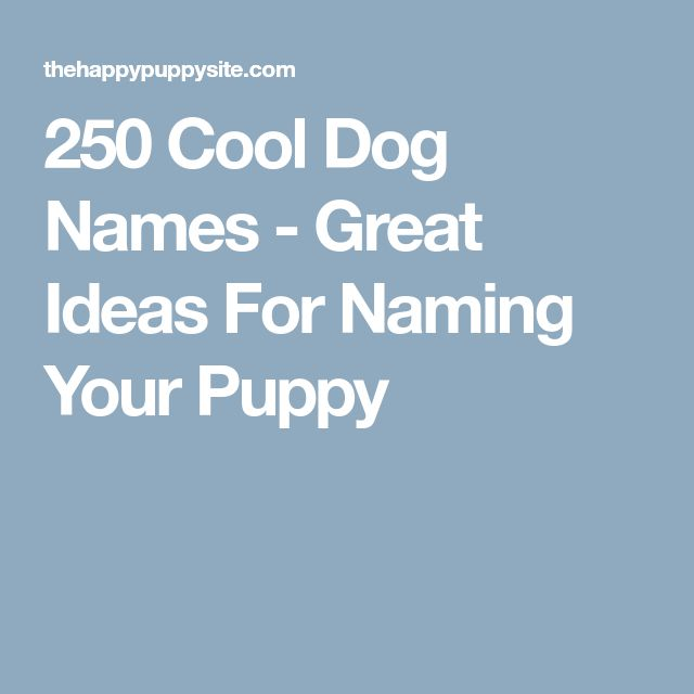 250 Cool Dog Names - Great Ideas For Naming Your Puppy
