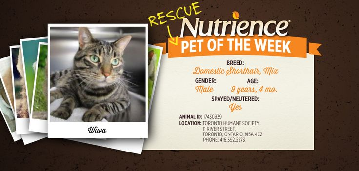 Wiwa is a beautiful green-eyed mix who needs his forever home. You can find more info on how to #adopt this Nutrience Pet Of The Week here: http://bit.ly/1GISvSi #cat #cats #rescue