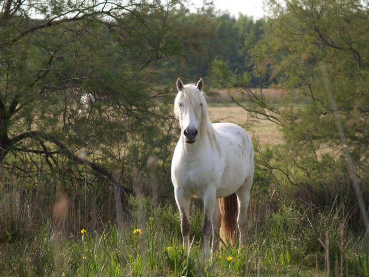 野生の白い馬 動物 高解像度で壁紙