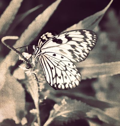 If Nothing Ever Changed, There'd Be No Butterflies - Sepia Macro of a pretty Butterfly Art Print