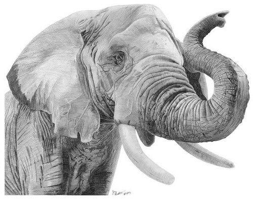 Гиперреалистичный рисунок слона карандашом