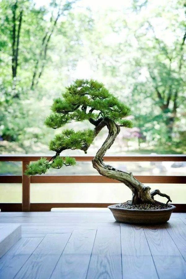 New Bonsai Baum Diese ausgefallene Pflanze n her kennenlernen u