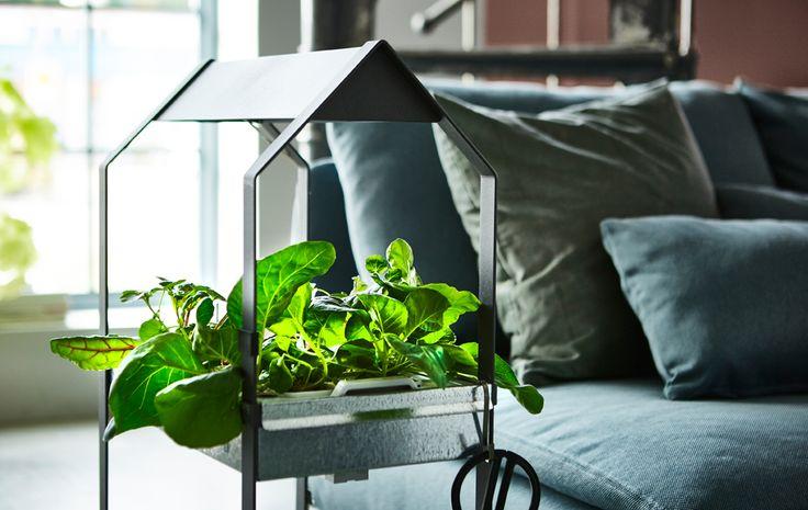 Un piedistallo con piante ed erbe aromatiche in soggiorno di fianco a un divano - IKEA