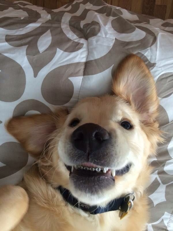 Look at this goofy dog with braces.