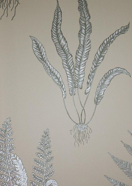 Woodland Ferns Wallpaper Silver fern and root design, with charcoal definition, on a beige background.