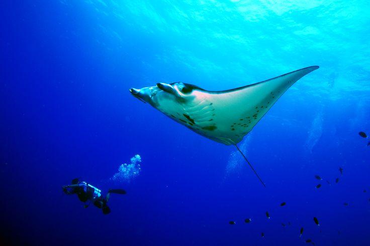 Dykning med Discovery Palawan i Filippinerne er en fantastisk oplevelse! Måske støder du på kæmpestore rokker i vandet?