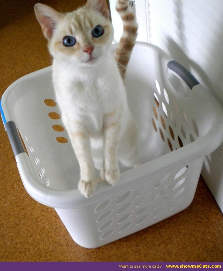 Cuteness in a basket - #showmecats #thecutie