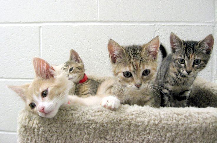 Sweet Kittens :)